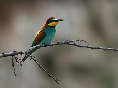 vogelreis-naar-bukk-tisza-en-hortobagy-in-hongarije