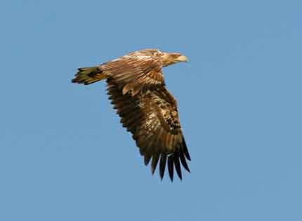 vogelexcursie-lauwersmeer
